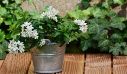 8 rostlin, které vám pomohou v domě navodit pozitivní energii