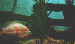 Vybíráme akvárium do domu nebo bytu