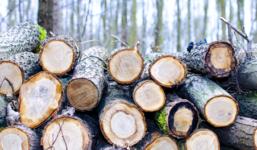 Rizikové kácení stromů u vaší nemovistosti