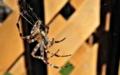Jak se zbavit hmyzu a pavouků v domě?