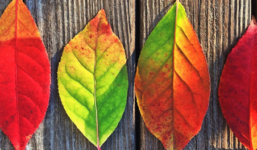 Psychologie barev a jejich využití v interiéru