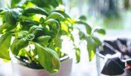 Vypěstujte si doma bylinky pro vaření