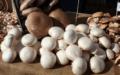 Čerstvé houby každý den. Naučte se jak pěstovat houby doma.