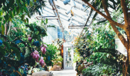 Pořizujeme zahradní skleník