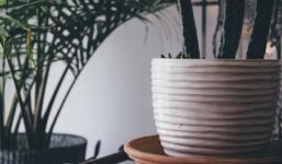 Zalévání rostlin v bytě