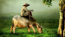 Vietnam je krásná země s bohatou historií