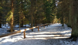 Šumava v zimě: Jezerní slať